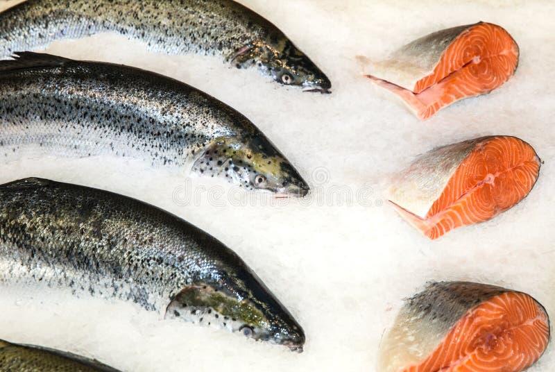 rybia świeża czerwień zdjęcia royalty free