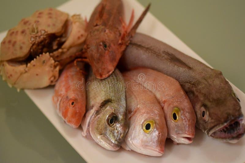 Rybia mikstura dla gulaszu obraz stock