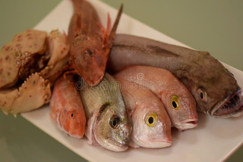Rybia mikstura dla gulaszu obrazy royalty free