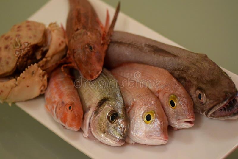Rybia mikstura dla gulaszu zdjęcie royalty free
