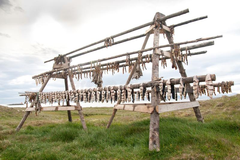 Rybia osuszka na Flatey wyspie, Iceland fotografia royalty free