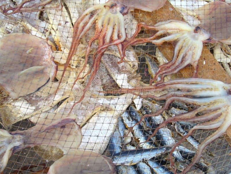 Rybia osuszka w słońcu, Nazare Portugalia fotografia royalty free
