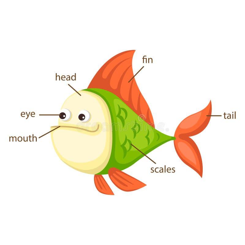Rybia słownictwo część ciało wektor ilustracji