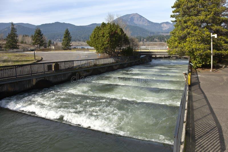 Rybie drabiny w Bonneville Oregon fotografia stock