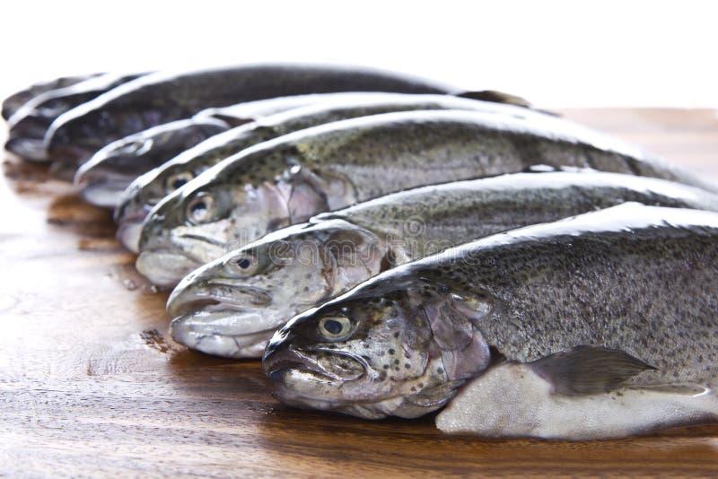 rybie głowy zdjęcie royalty free