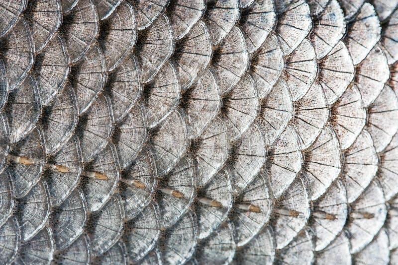 rybie skala zdjęcia stock
