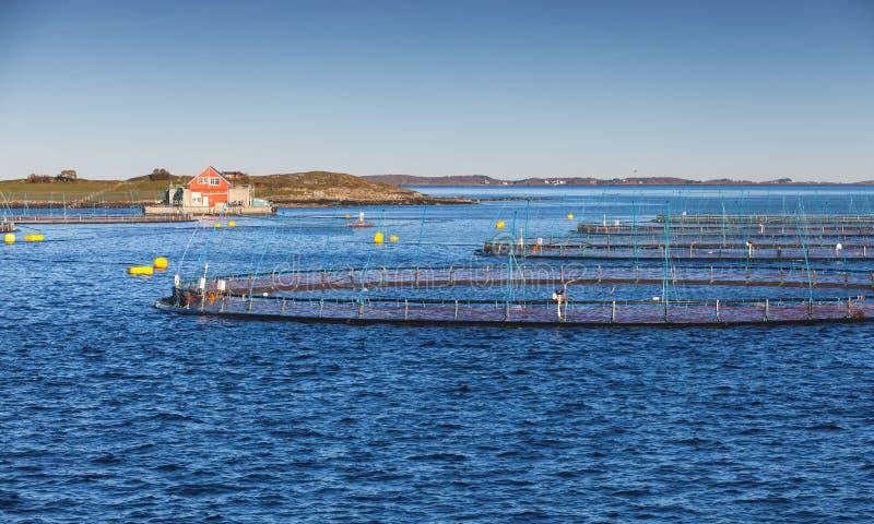 Rybiego gospodarstwa rolnego, łososia i pstrąg produkcja, zdjęcie stock