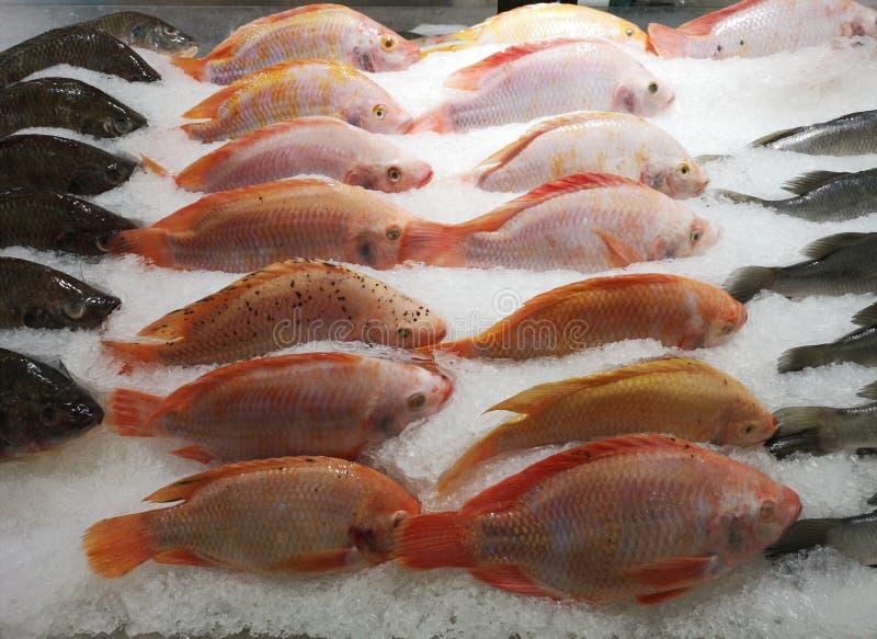 Rybiego rynku kram z rybą w lodzie fotografia royalty free