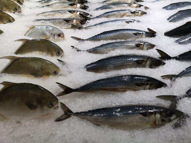 Rybiego rynku kram z rybą w lodzie zdjęcie stock