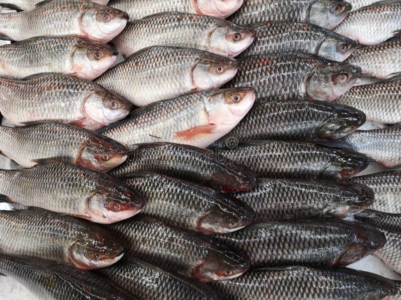 Rybiego rynku kram z rybą w lodzie obrazy royalty free