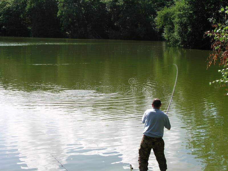 ryby zdjęcia stock