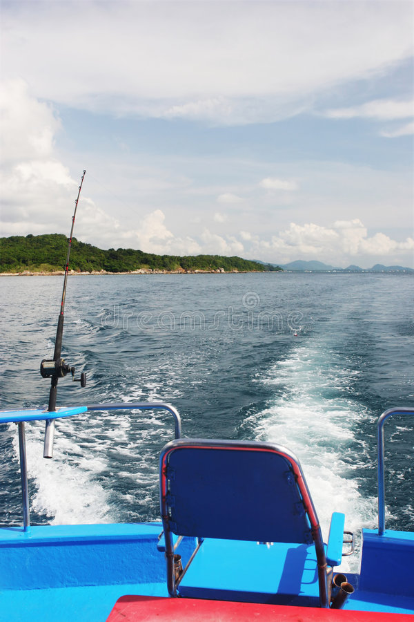 ryby, zdjęcia royalty free