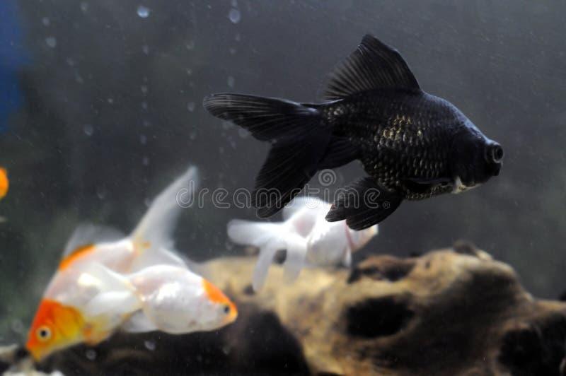 ryby zdjęcie royalty free