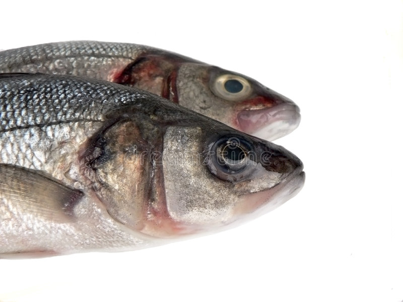 ryby obrazy royalty free