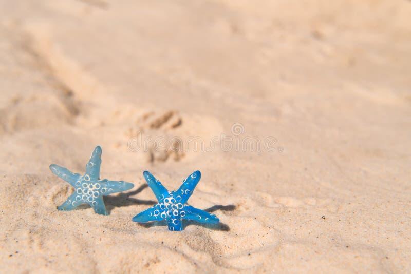 Ryby Blue Star na plaży obrazy royalty free