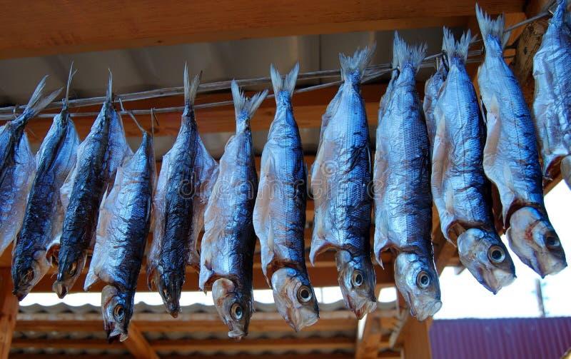 ryby dymiąca fotografia stock