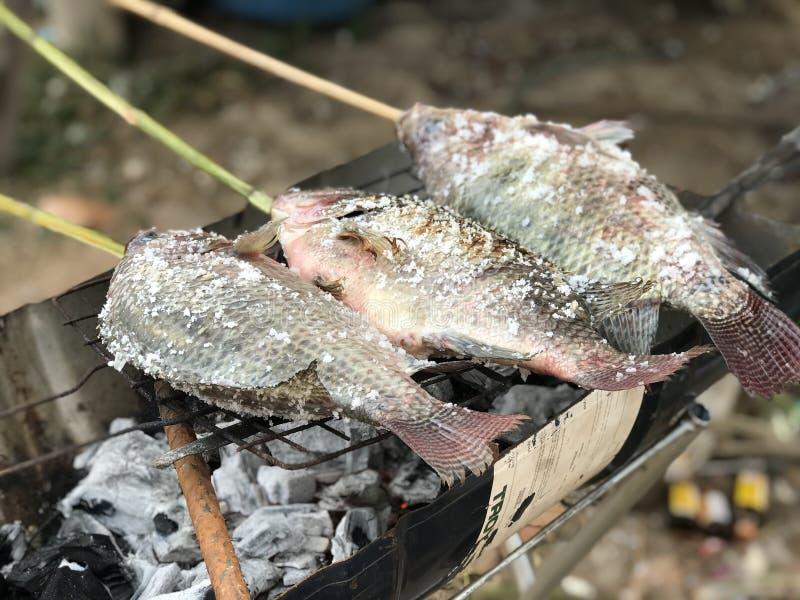 Ryby grillowane to żywność świeżo solona zdjęcie royalty free