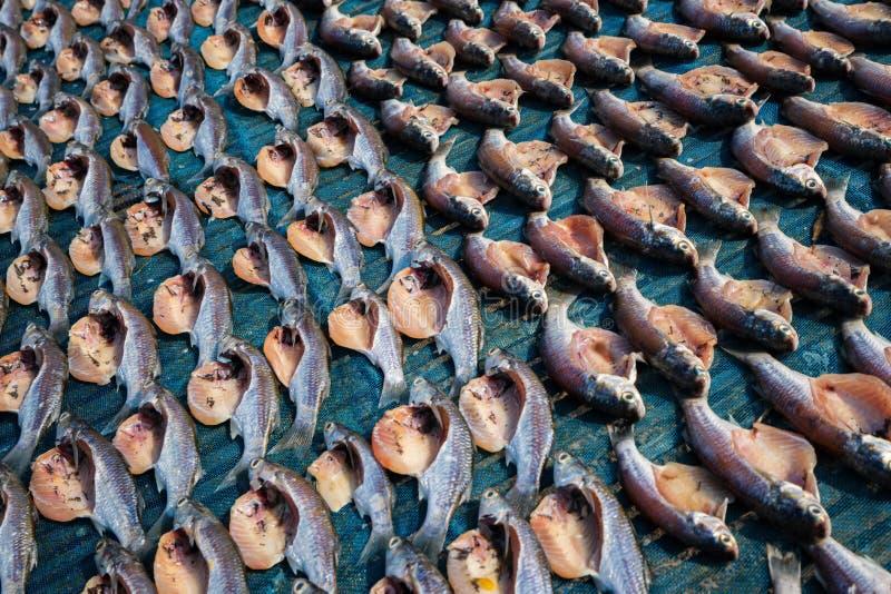 Ryby morskie są cięte i suszone zdjęcie stock