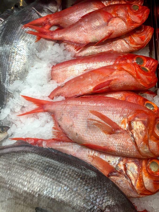 ryby mrożone lodu fotografia stock