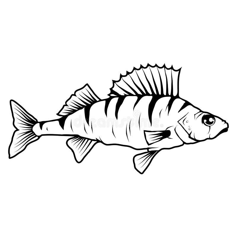 Ryby Ręcznie Wciągane. rybiego jedzenia pietruszki talerz piec morze. Bas ryba. Denni mieszkanowie. pyszne owoce morza. Połowy  royalty ilustracja