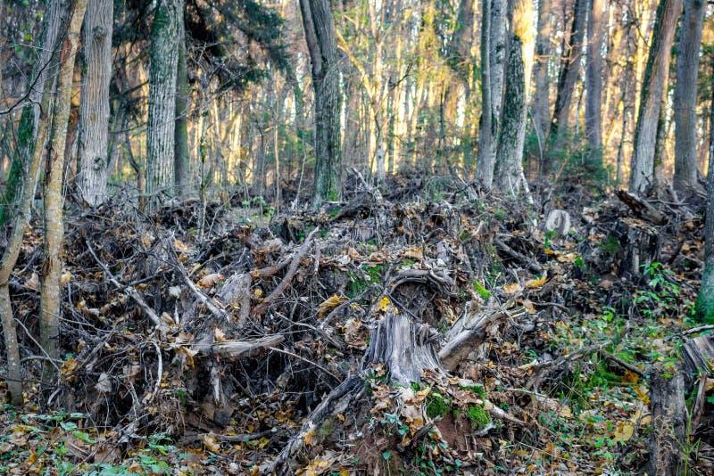 Ryckte upp träd som staplas i träna royaltyfri foto