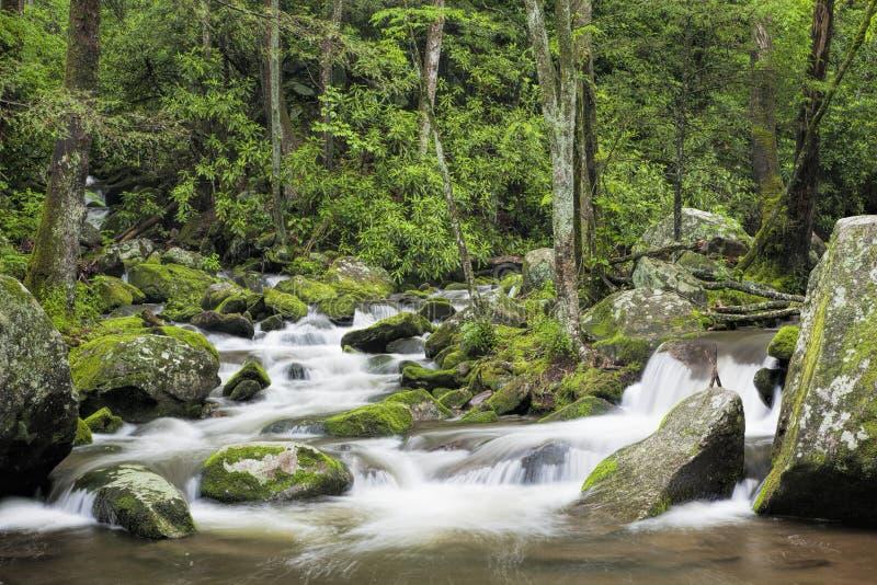 Ryczeć rozwidlenie zatoczkę w Great Smoky Mountains usa zdjęcia royalty free