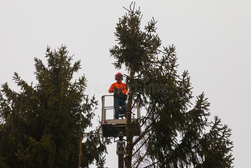RYCZYWOL POLEN - FEBRUARI 18, 2017 - bitande träd för skogshuggare med en chainsaw royaltyfri fotografi