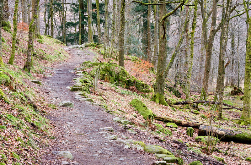 Download Rydal Forest Path stock photo. Image of woods, greenery - 26547602