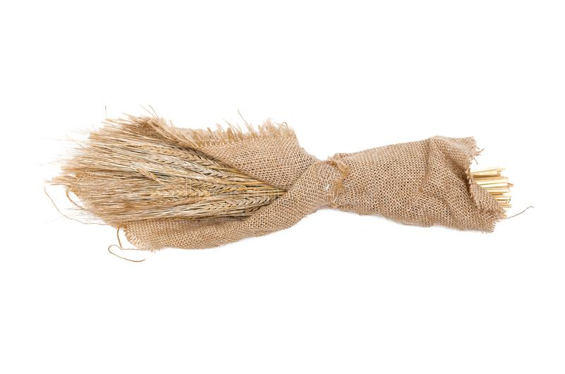 Rye ears wrapped in burlap cloth. royalty free stock photo