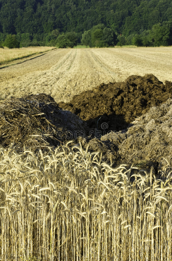 Rye fields and manure heaps royalty free stock images