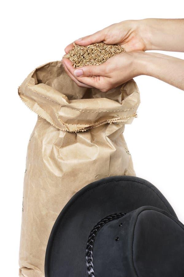 Rye grain royalty free stock image