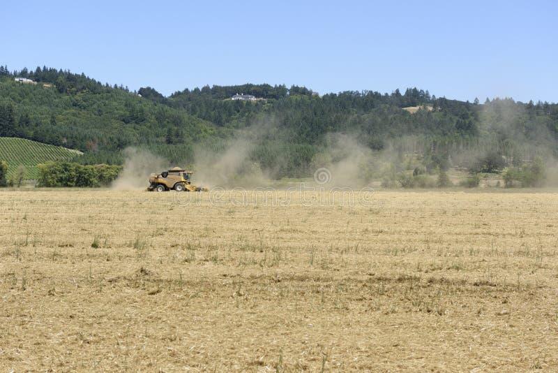 Oregon Grown Rye Grass Harvest in the Willamette Valley, Marion County. Rye Grass Harvest in the Mid-Willamette Valley stock photo