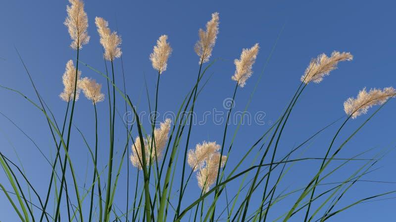 Ryegrass floreciente Rendered foto de archivo libre de regalías