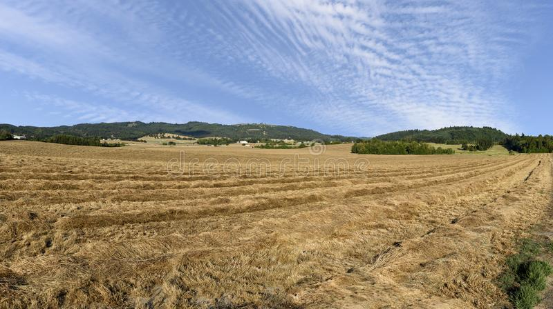 Oregon Grown Ryegrass Harvest in the Mid-Willamette Valley, Marion County. Ryegrass Harvest in the Mid-Willamette Valley stock photos