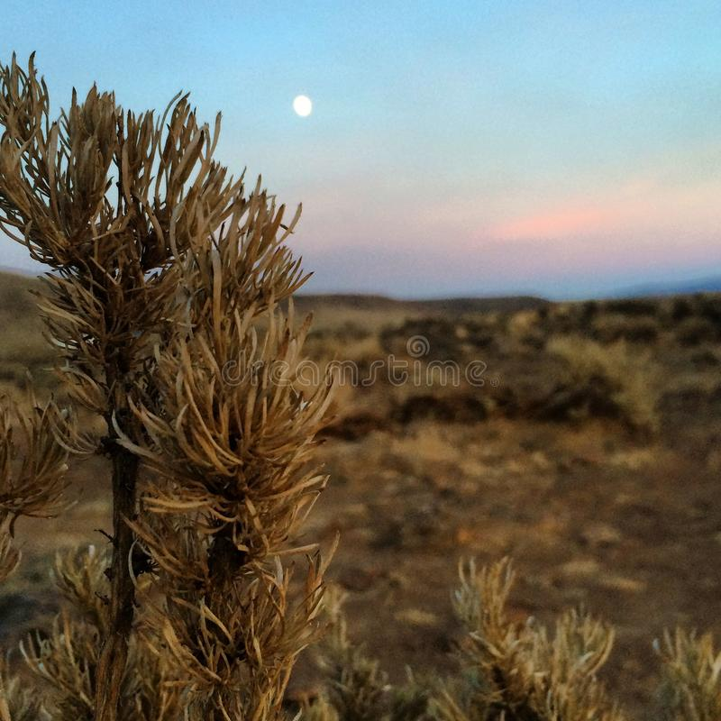 Ryegrass Szpieguje księżyc fotografia royalty free