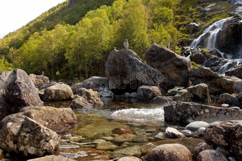 Ryfylke vattenfall på Svandalsfossen i Norge, kraftig vattenfall i norska berg Nationell turistRyfylke rutt arkivbilder