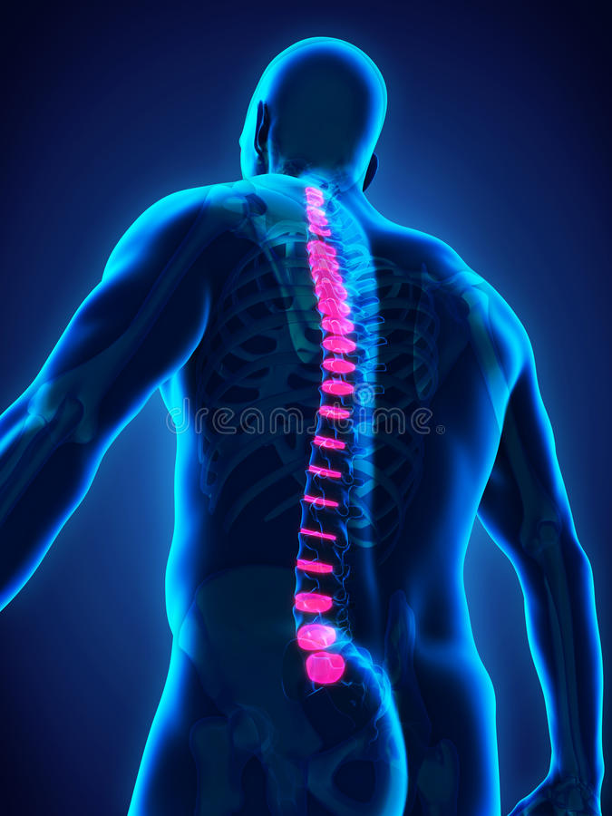 Ryggradintervertebralskivaanatomi stock illustrationer