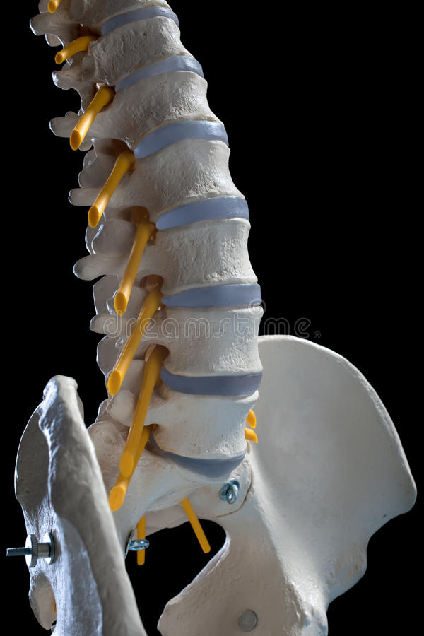 ryggrads- kolonn arkivbild