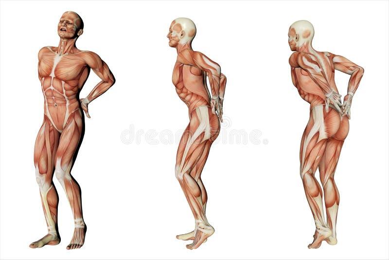 Ryggvärken som är tillbaka smärtar vektor illustrationer