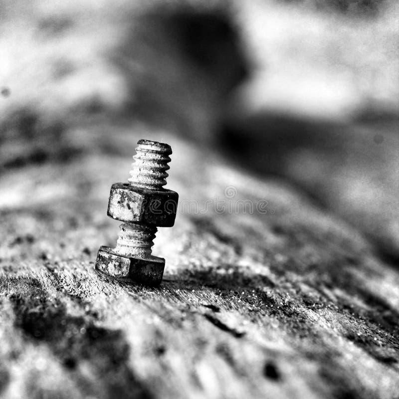 Rygiel na driftwood obraz stock