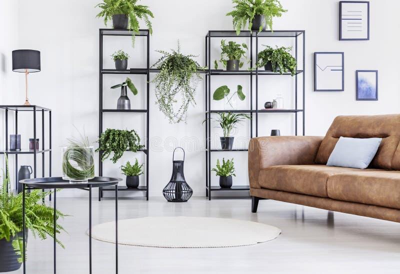 Rymlig vit vardagsrum med den stads- djungeln på svart metallhylla- och whitbrunt piskar soffan royaltyfria foton