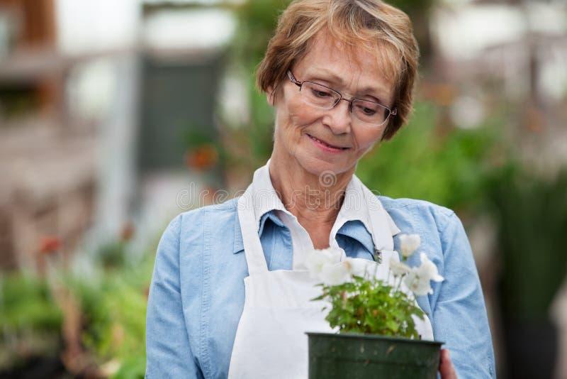 rymma den inlagda höga kvinnan för växt royaltyfri bild