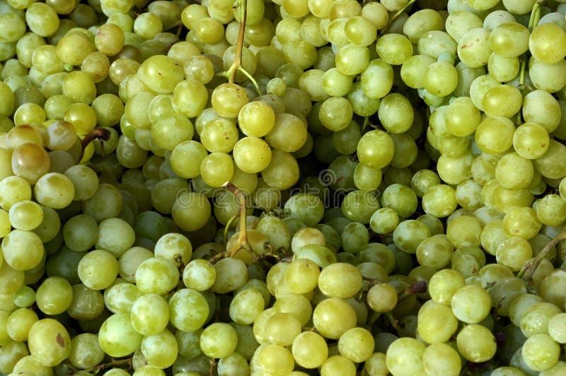 rynek winogron obraz royalty free
