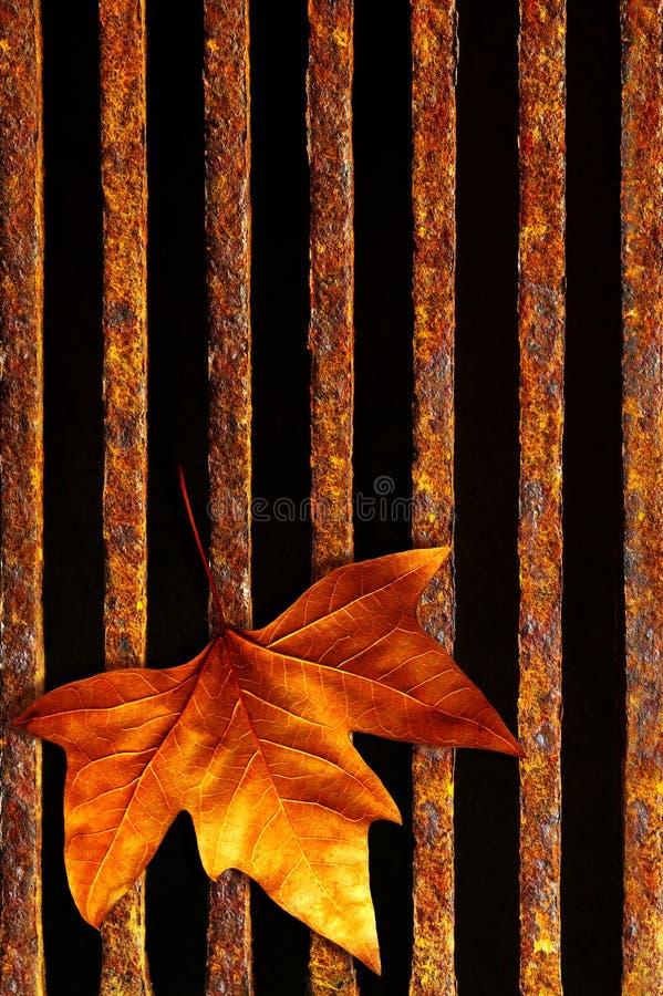 rynsztokowy liść zdjęcia stock