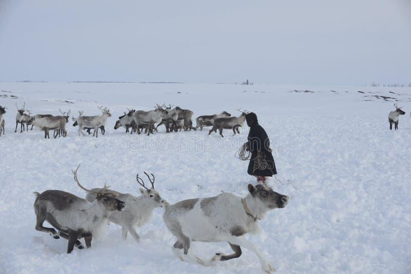 Rysk arktisk aboriginer! fotografering för bildbyråer