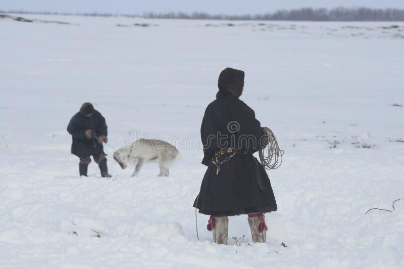 Rysk arktisk aboriginer! royaltyfri bild