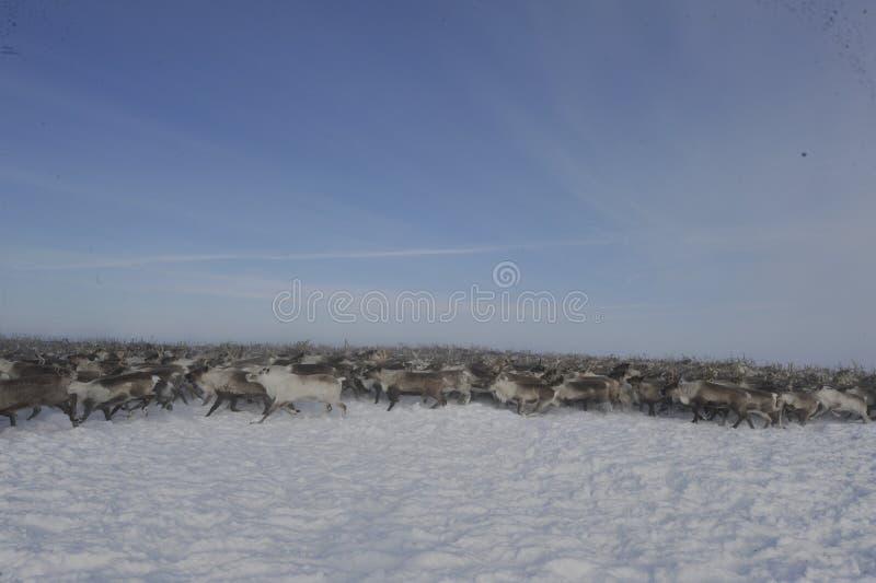 Rysk arktisk aboriginer royaltyfri fotografi