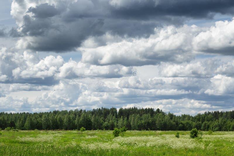 Rysk bygdlandskape med molnig himmel arkivbild