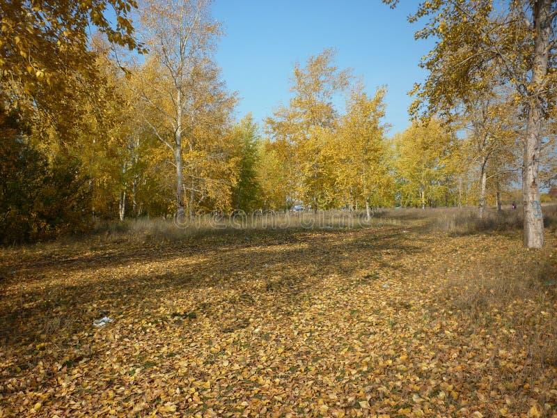 Rysk skog arkivfoto