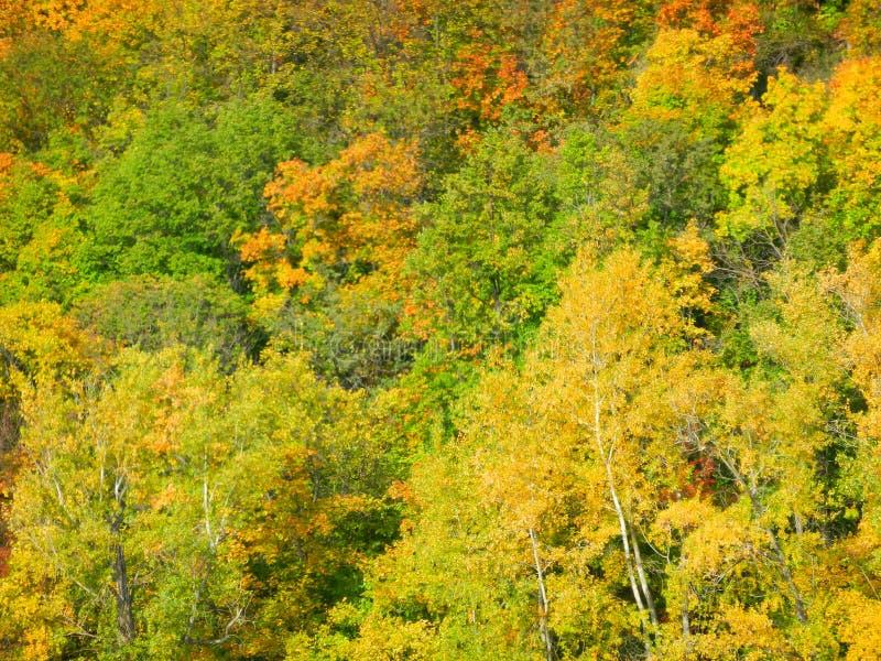 Rysk skog royaltyfria bilder